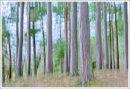Derwent Water Trees 3