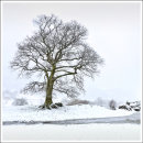 Langdale Tree in the Snow