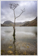 306 Buttermere Tree