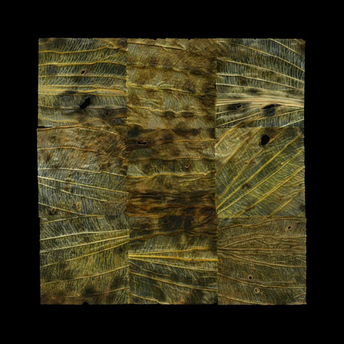 Field of vision, Hosta NO 9, 2011