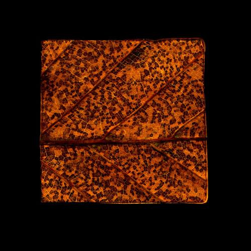 Leaf Cut NO 2, Field Patterns, 2011