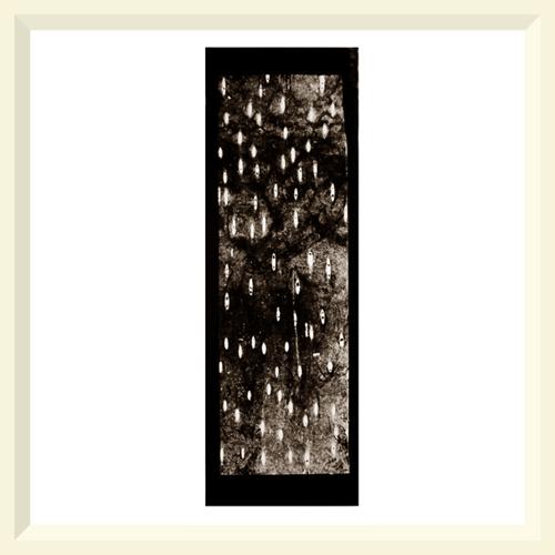O Hanami No.3 - Mere Sands Wood - 2003