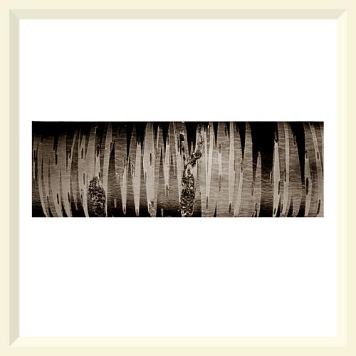 Silver Birch (Phloem) - Mere Sands Wood - 200