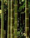 5 bamboo