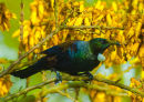 Tui 0364 at my place