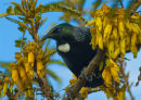 Tui 0366 at my place