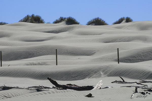 Foxton Sand dunes 1278-1