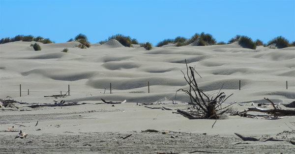 Foxton Sand Dunes1273-1