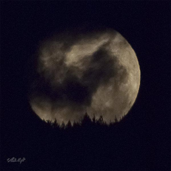 Moon 1003 over Arapaepae Ridge