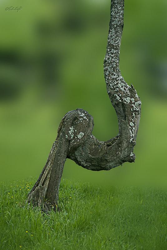 Hokio Rd tree 0605