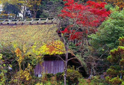 Thatched roof in Ikeda Nose