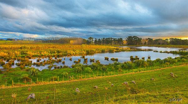 Sundown on Papaitonga Wetland