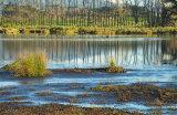 Papaitonga Wetland 0840-1
