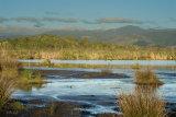 Papaitonga Wetland 0847-1