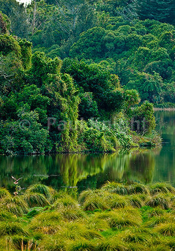 Papaitonga bush&Hawk 0305