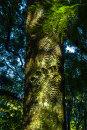 Papaitonga-trunk_0380