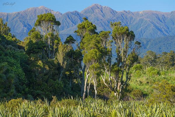 View from Papaitonga Wetland 0786-1