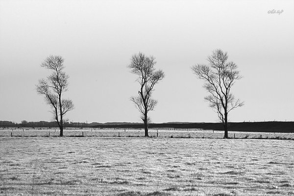 Winter Trees 0170