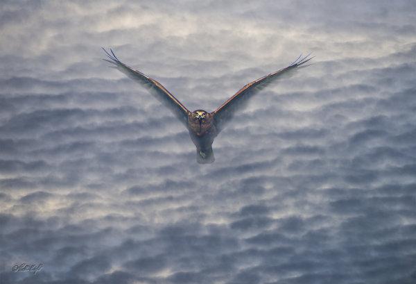 clouds2869+harrier hawk1841