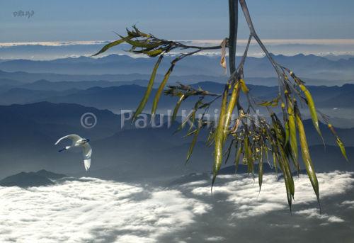 Flax & Spoonbill over Kaikoura