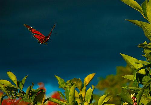 Monarch 1088