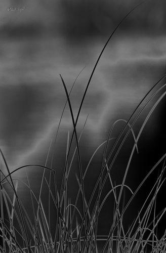 Reeds #12A V2