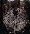 Web + spider