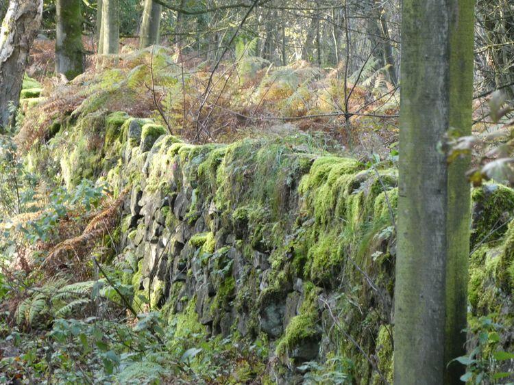 Mossy Wall  Black rocks Derbyshire