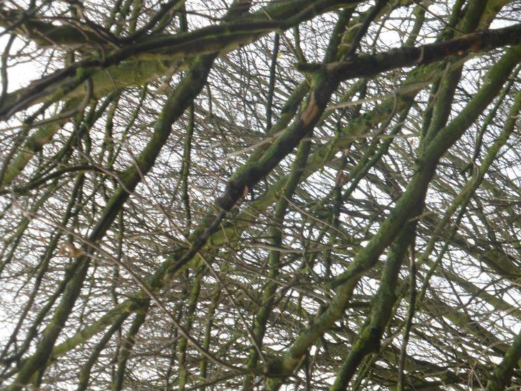Canopy Chaos