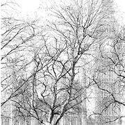 Parliament through the Trees