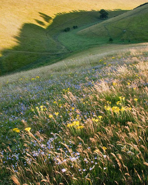 Wild Flowers and Shadows