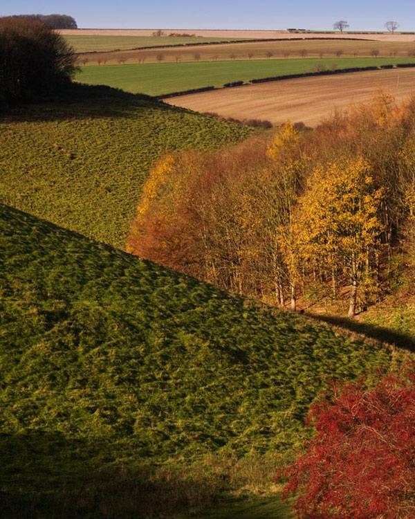 Autumn Geometry in Shortlands Dale