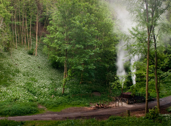 Charcoal Burner in Millington Woods