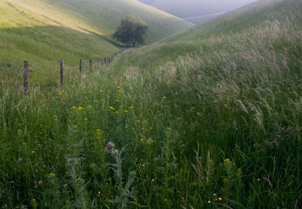 Summer Grassland