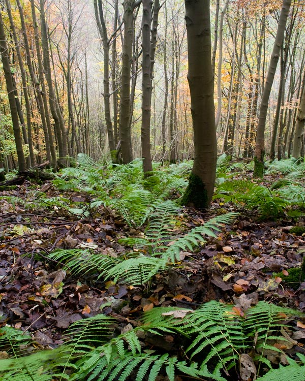 Tun Dale Ferns and Trunks