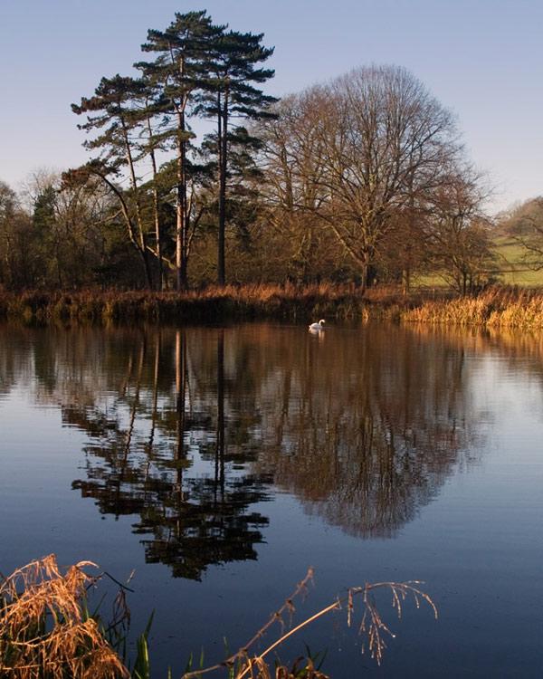 Calm Waters at Londesborough