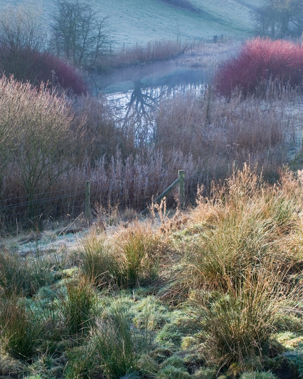 Winter Pond Colours