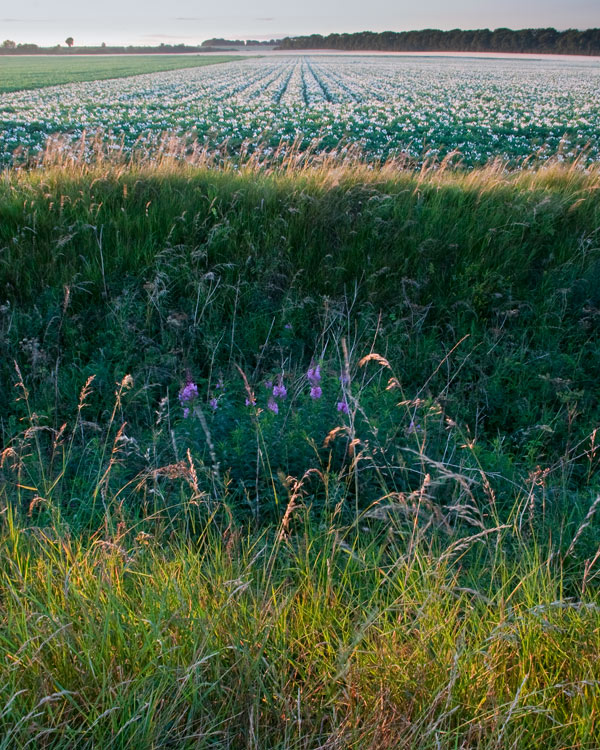 Wolds Flowers