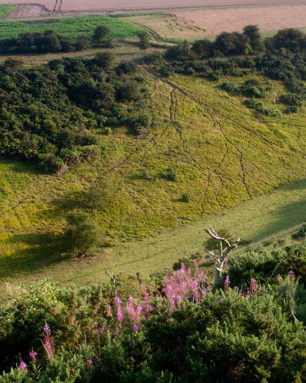 Sheep Tracks in Sylvan Dale