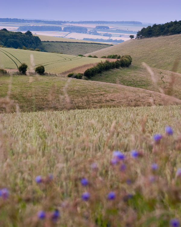 Wolds Summer View