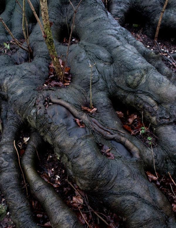 Wet Roots
