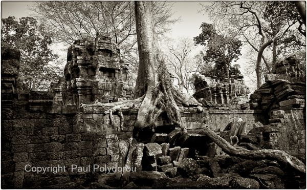 Ta Prohm Temple 1