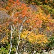 Autumn - Niigata, Japan