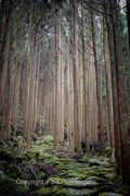 Kumano Kodo Path 2