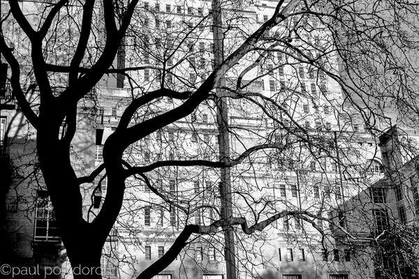 Senate House & tree