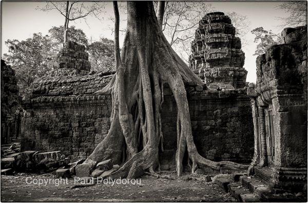 Ta Prohm Temple 2