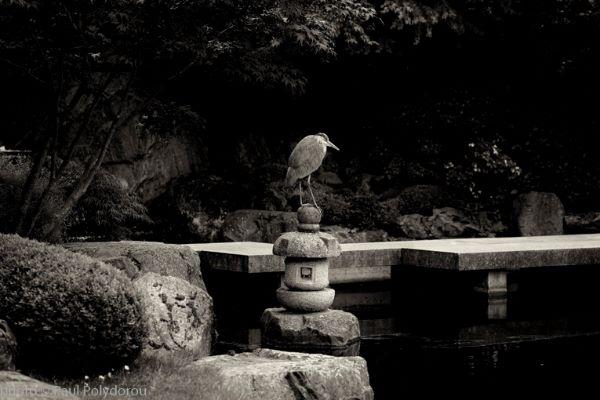 Heron, Kyoto Garden