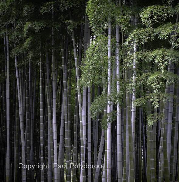 Bamboo Garden, Kyoto