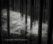 Forest, Kumano Kodo