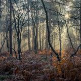 Birches through the light